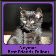 2015 - Adopted - Newmar