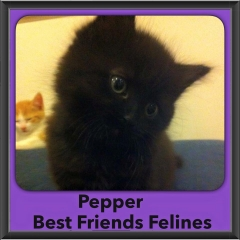 2015 - Adopted - Pepper