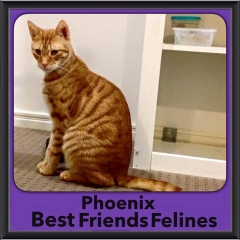 2015 - Adopted - Phoenix