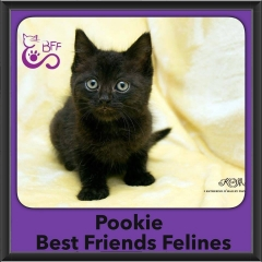 2015 - Adopted - Pookie