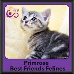 2015 - Adopted - Primrose