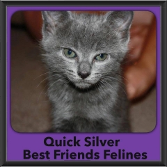 2015 - Adopted - Quick Silver