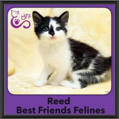 2015 - Adopted - Reed