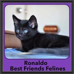 2015 - Adopted - Ronaldo