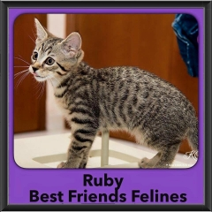 2015 - Adopted - Ruby