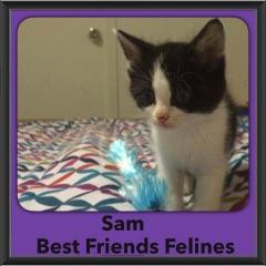 2015 - Adopted - Sam