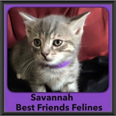 2015 - Adopted - Savannah