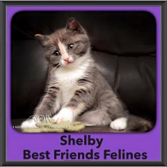 2015 - Adopted - Shelby