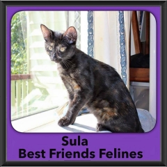 2015 - Adopted - Sula