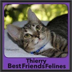 2015 - Adopted - Thierry