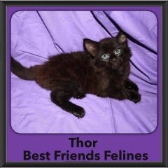 2015 - Adopted - Thor