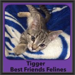 2015 - Adopted - Tigger