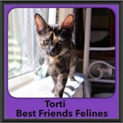 2015 - Adopted - Torti