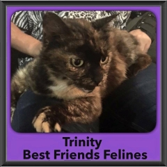 2015 - Adopted - Trinity