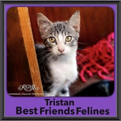 2015 - Adopted - Tristan