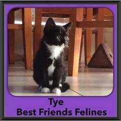 2015 - Adopted - Tye