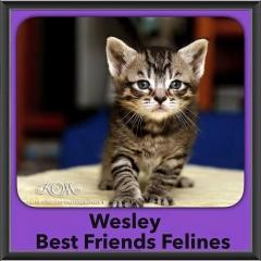 2015 - Adopted - Wesley