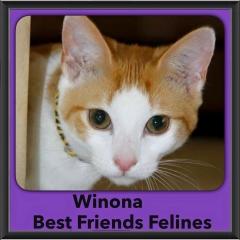 2015 - Adopted - Winona