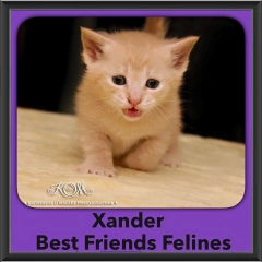 2015 - Adopted - Xander