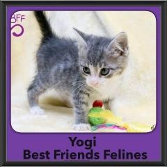2015 - Adopted - Yogi