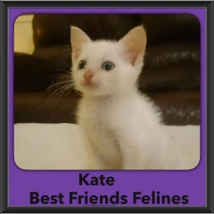 2015 - Adopted - kate