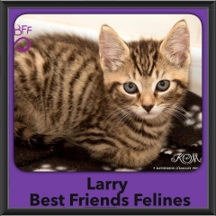 2015 - Adopted - larry