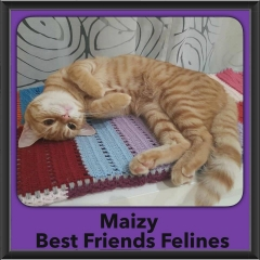 2015 - Adopted - maizy