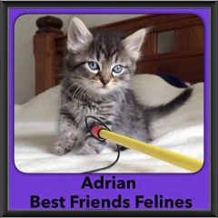 2016-Adopted-Adrian