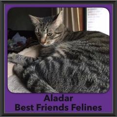 2016-Adopted-Aladar