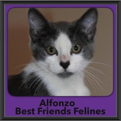 2016-Adopted-Alfonzo