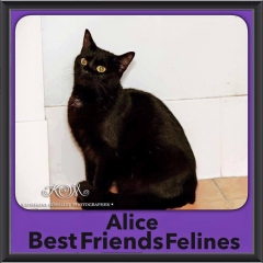 2016-Adopted-Alice