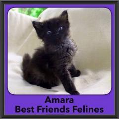 2016-Adopted-Amara