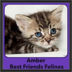 2016-Adopted-Amber