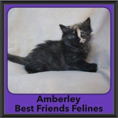 2016-Adopted-Amberley