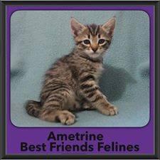 2016-Adopted-Ametrine