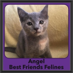2016-Adopted-Angel