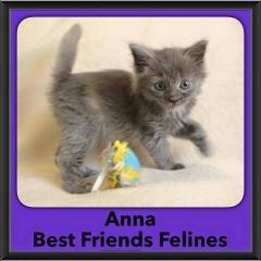 2016-Adopted-Anna