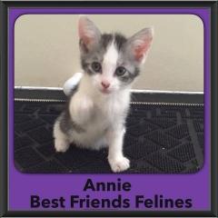 2016-Adopted-Annie