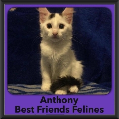 2016-Adopted-Anthony