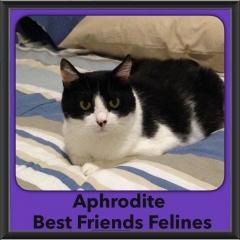 2016-Adopted-Aphrodite