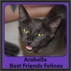 2016-Adopted-Arabella