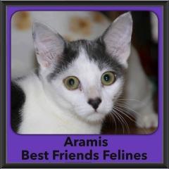 2016-Adopted-Aramis