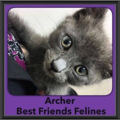 2016-Adopted-Archer
