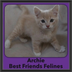 2016-Adopted-Archie