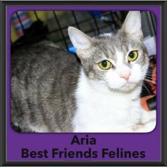 2016-Adopted-Aria