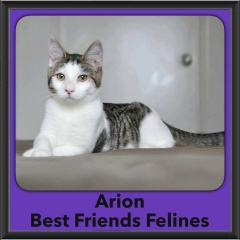 2016-Adopted-Arion