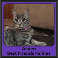 2016-Adopted-Aspen
