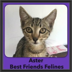 2016-Adopted-Aster