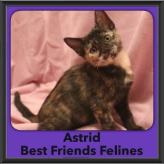 2016-Adopted-Astrid