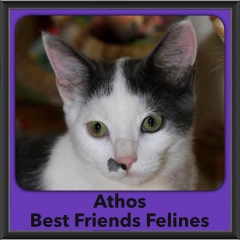 2016-Adopted-Athos